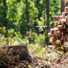 Seimas spręs, ar saugomose teritorijose uždrausti plynuosius kirtimus