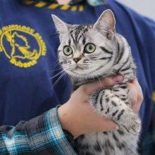 Parodoje – tituluočiausios Lietuvos katės