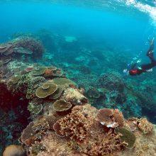 Kas galėtų apsaugoti Didįjį barjerinį rifą?