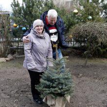 Kalėdinę eglę miestui dovanojusiems klaipėdiečiams – nauja eglutė