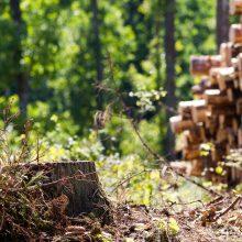 Miškų urėdijos vadovas: plyni kirtimai taip pat reikalingi