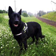 Iš pelkės spąstų senolį išgelbėjo policijos šuo