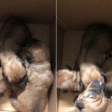 Beširdžiai: šuniukus į šiukšlių konteinerį išmetė maiše su buteliais