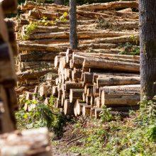 Seimas leido šešiuose rajonuose kirsti miškus ir statyti namus