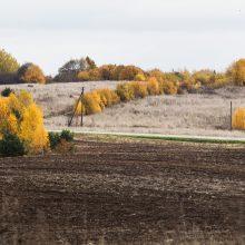 Seimas ruošiasi panaikinti žemės įsigijimo saugiklius