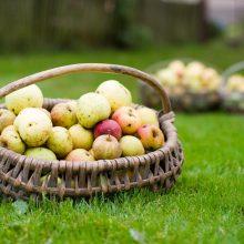 Obuolių actas naudingas ir metant svorį