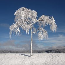 Orai: šaltą baltą žiemą sujauks plūstelėjusi šiluma