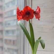 Meilenis – ilgėjančių pavasario dienų pranašas
