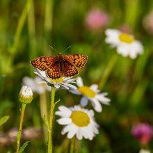 S. Paltanavičius: ar nėra pavojaus, kad vabzdžių po tokios vasaros taps mažiau?