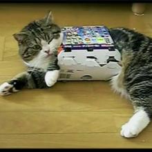 """TOP3 populiariausi """"Youtube"""" įrašai apie kates"""