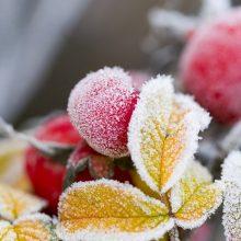 S. Paltanavičius: gali būti, kad gavome pranešimą apie laukiančią nesunkią žiemą