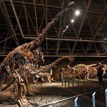Rusijoje atrasti milžiniški dinozaurai pavadinti sibirotitanais