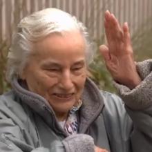 Garbaus amžiaus moteris išgyveno, nors jai įgėlė 74 vapsvos