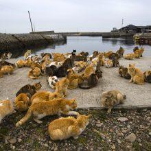 Kaimo bendruomenei įgriso: užsimojo atsikratyti visų kačių