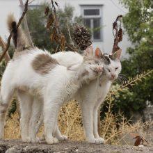 Šimto eurų pensija netrukdo rūpintis 40 benamių kačių