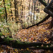 Kaunas ketina atnaujinti dar vieną žaliąją miesto erdvę