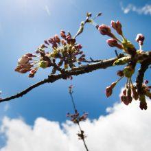 Pavasaris ateina: jau greitai – 18 laipsnių šilumos