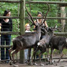 Dėl Zoologijos sodo rekonstrukcijos pirkimo – naujos žinios