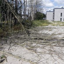 Pradėtas ikiteisminis tyrimas dėl sunaikintų medžių Palangoje