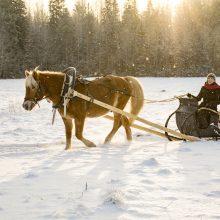 Šeštadienį pajūryje – žiemos šventė su žirgais