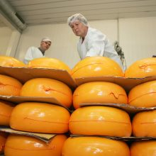 """""""Pieno žvaigždės"""" neigia informaciją apie sūrio gamybą Rusijoje"""
