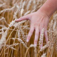 Liūčių skandintiems ūkininkams – kompensacijos