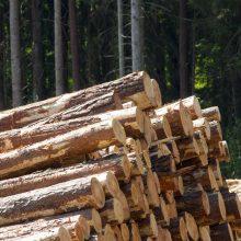 Teismas nepriėmė nagrinėti visuomenininkų skundo dėl miškų kirtimo