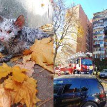 Jautrūs ugniagesiai išgelbėjo sąmonę praradusį katinėlį