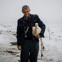 Bulgarai gelbėja apledėjusius gandrus