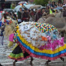 Asilų konkursą laimėjo koketiškos kaimietės kostiumu papuoštas gyvulys