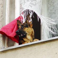 Seimas siūlo apynasrį triukšmaujantiems gyventojams ir gyvūnų šeimininkams