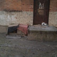 Kauniečiai: benamės katės okupuoja daugiabučių namų kiemus