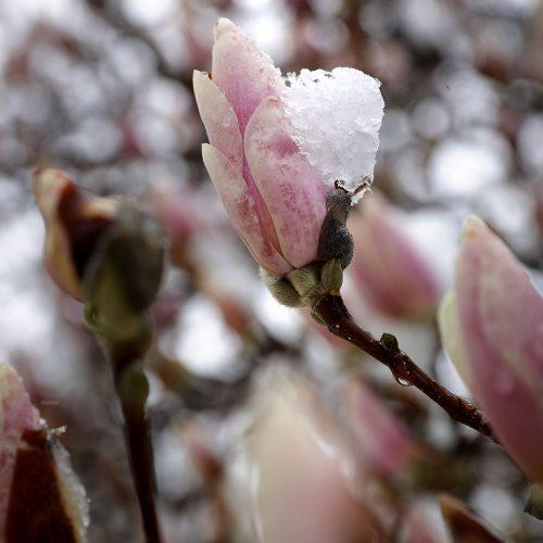 Pavasario pūgos JAV  © Scanpix nuotr.