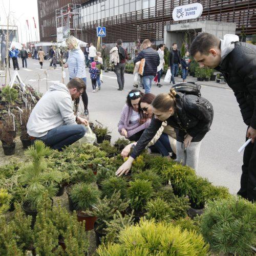 Balandžio 16-oji Klaipėdos diena  © Vytauto Liaudanskio nuotr.