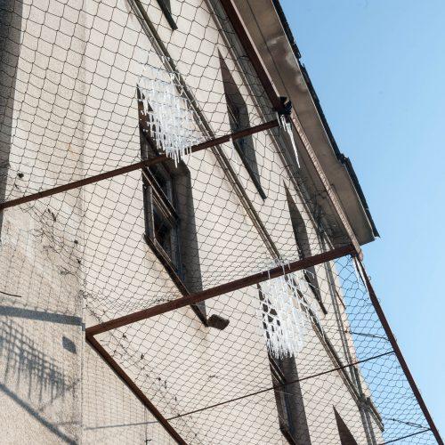 Varvekliai ant žydų ligoninės tinklų  © Akvilės Snarskienės nuotr.