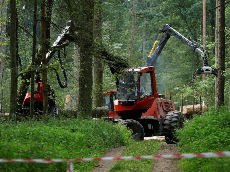 Teisingumo Teismas: Belovežo girią kirtusi Lenkija pažeidė ES direktyvas