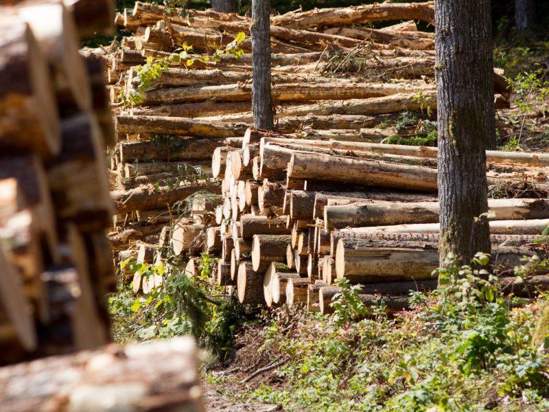 Eksportuojamą medienos žaliavą siūloma apmokestinti 15 proc.