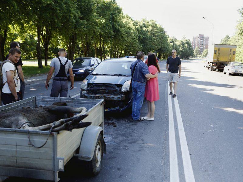 Briedis Klaipėdoje sukėlė avariją