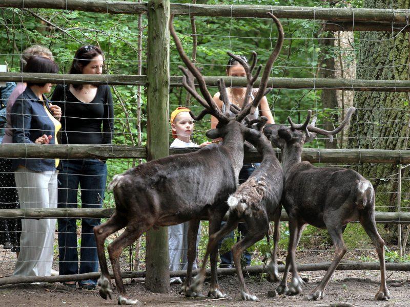 Teismas stabdys milijoninius Lietuvos zoologijos sodo viešuosius pirkimus