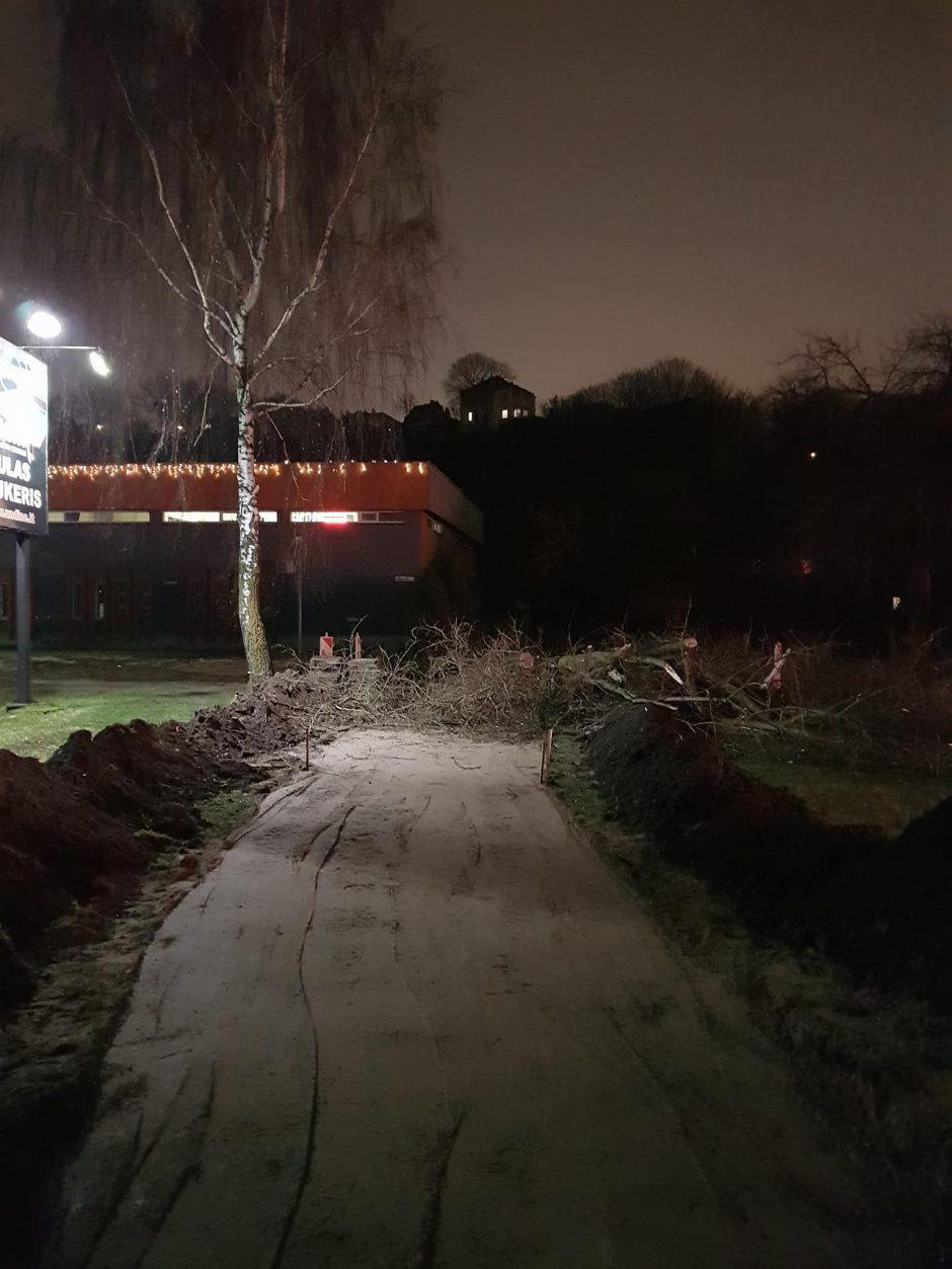 Dėl niekur nevedančio tako reikėjo kirsti medį?