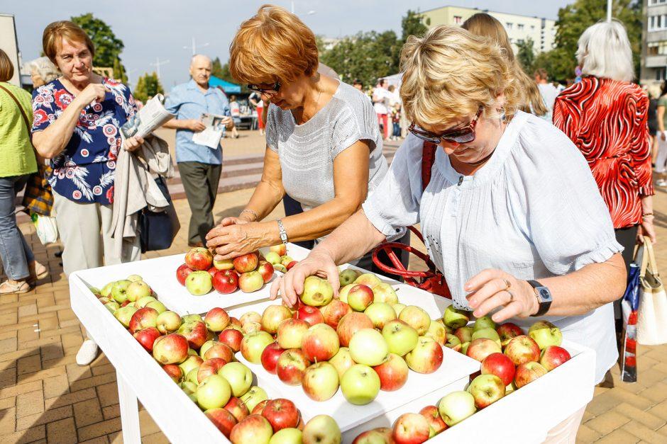 100-mečio obuolių šventė ūžė Gargžduose