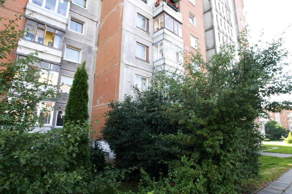 Medis butą pavertė ola