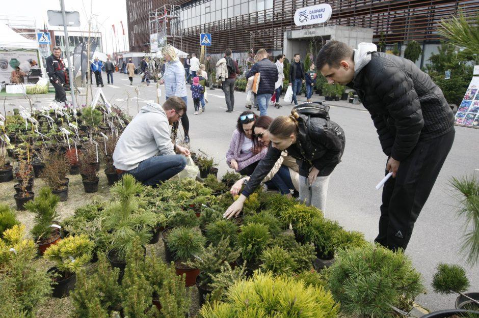 Balandžio 16-oji Klaipėdos diena