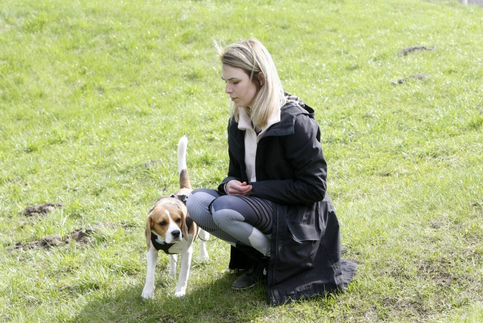 Klaipėdoje miško taku bėgo būrys šunų augintojų ir jų gyvūnai
