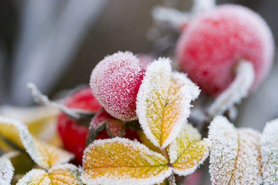 Orai: įmirkusią žemę sustingdys šaltukas