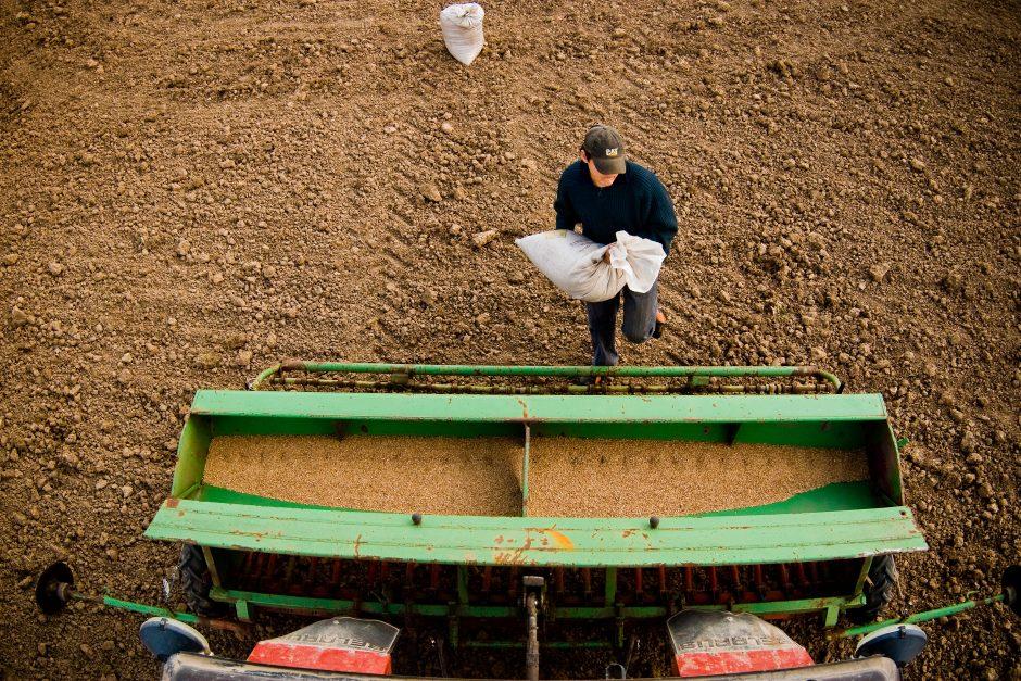 Ūkininkams – S. Skvernelio pažadas dėl tiesioginių išmokų