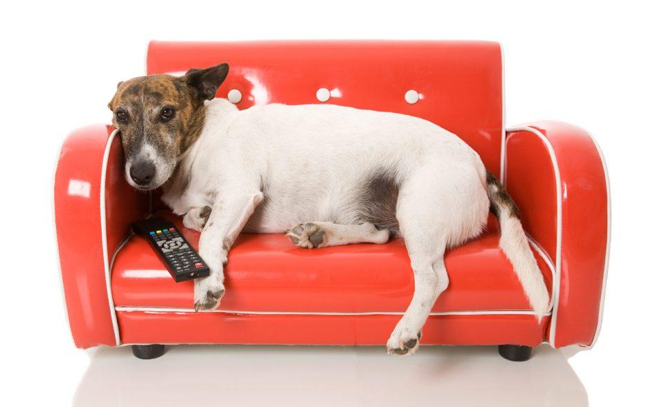 Namie nuobodžiaujančiam šuniui – speciali TV programa