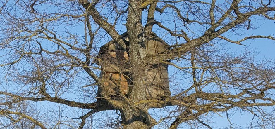 Ar gyvena kas medyje?