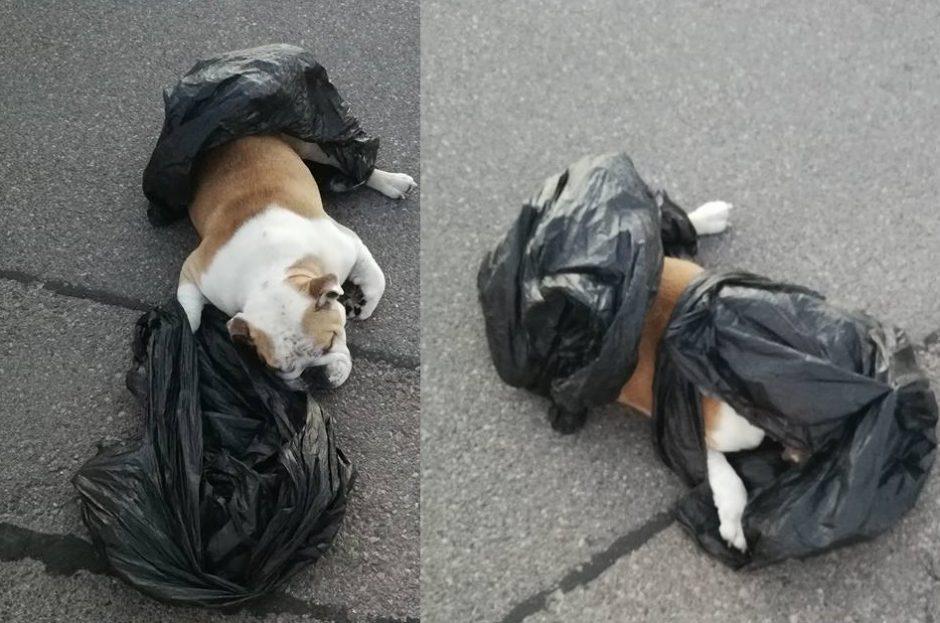 Trūksta žodžių: prie prekybos centro išmetė negyvą šunį (ieškomi liudininkai)