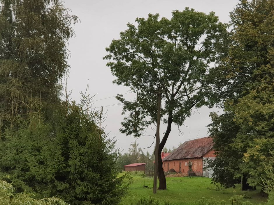 Sinoptikų prognozės išsipildė: Kaune lūžo medžiai, apsemta sporto halė